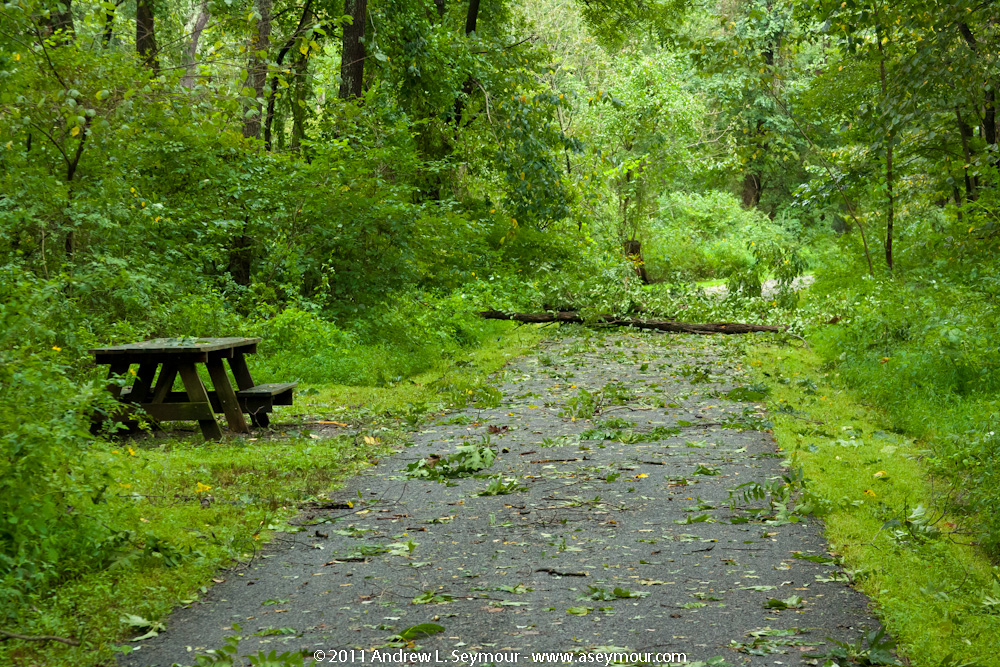 Fallen tree across Struble Trail