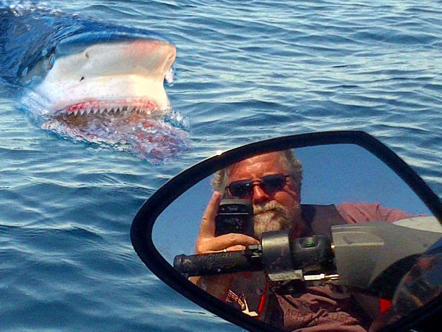 Skip with Shark 1