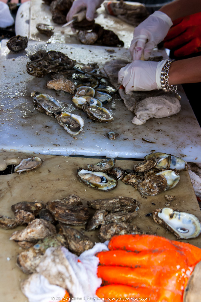 Shocking Oysters - Closeup