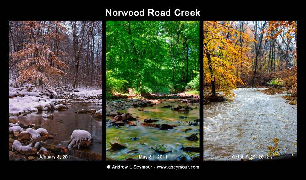 Norwood Rd Creek (1/11 5/31 10/12)