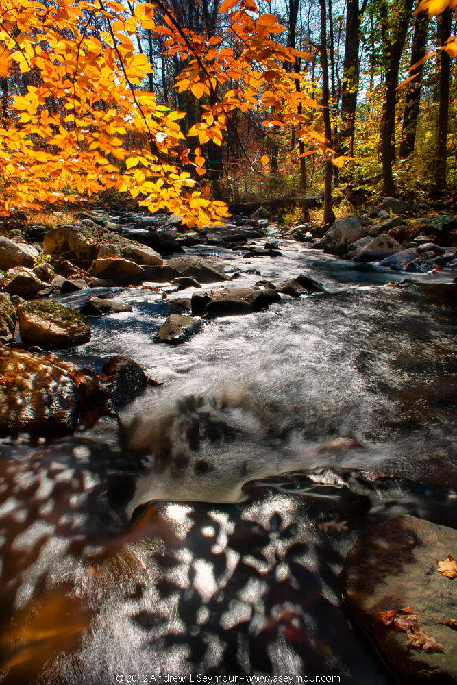 Fall Colors - Glenmoore (2012)