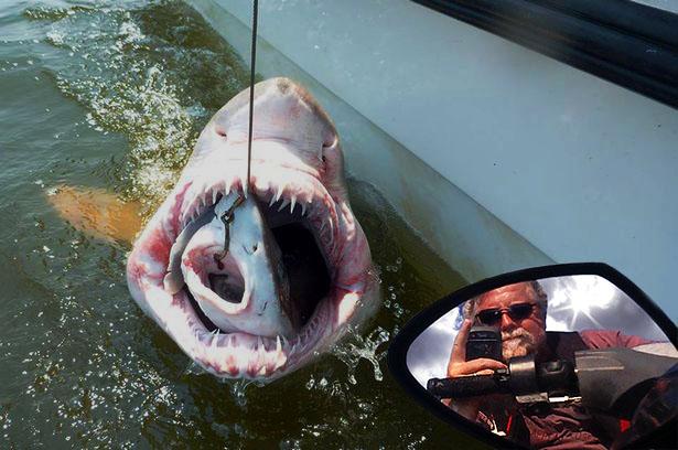 Shark, Shark, Skip!